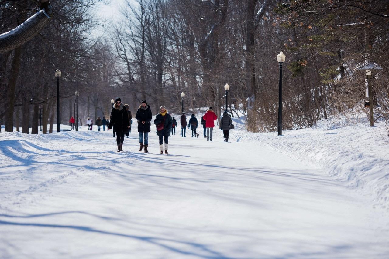Chemin Olmsted parc du Mont-Royal à Montréal